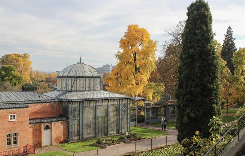 Goldener Herbst in der Wilhelma